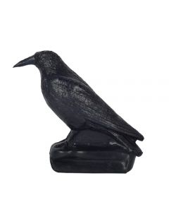 60172 FB Carrion Crow